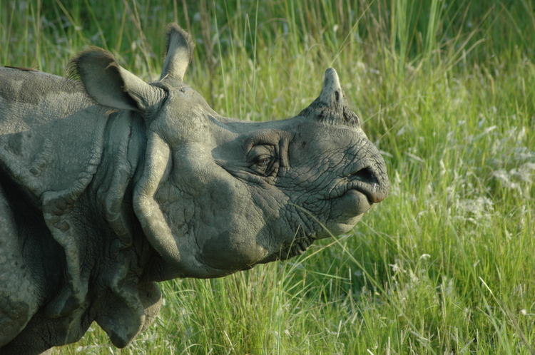Rarest Animals Rhino Up Close