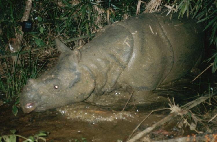 Rare Rhino Water
