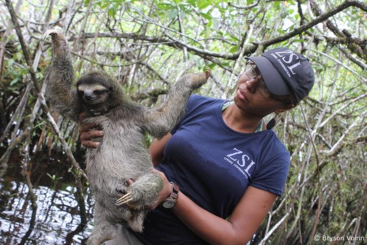 Rarest Animals Sloth Human