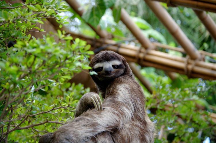 Rarest Animals Sloth Up Close
