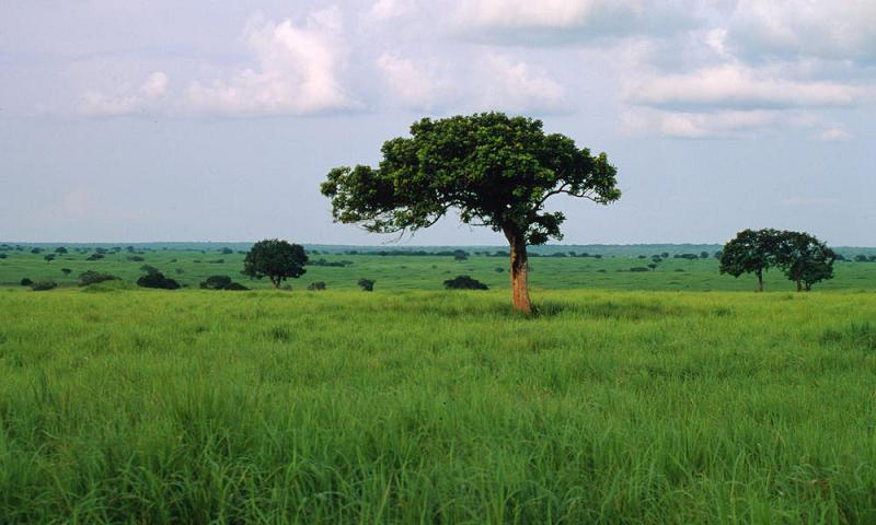 World Before God African Grassland