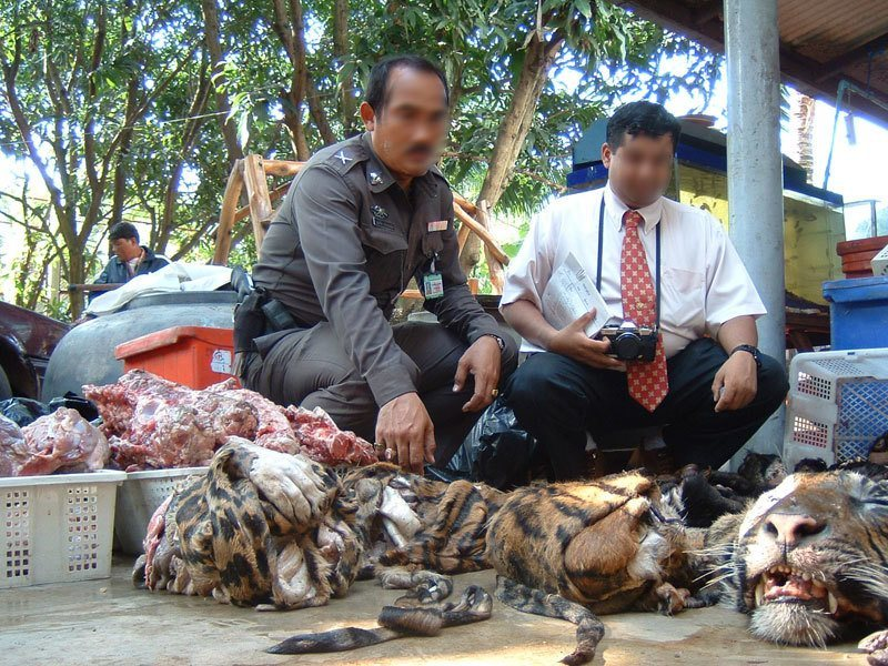 Tiger Poachers