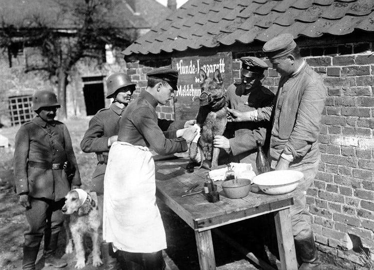 1918 Flu Pandemic Dogs