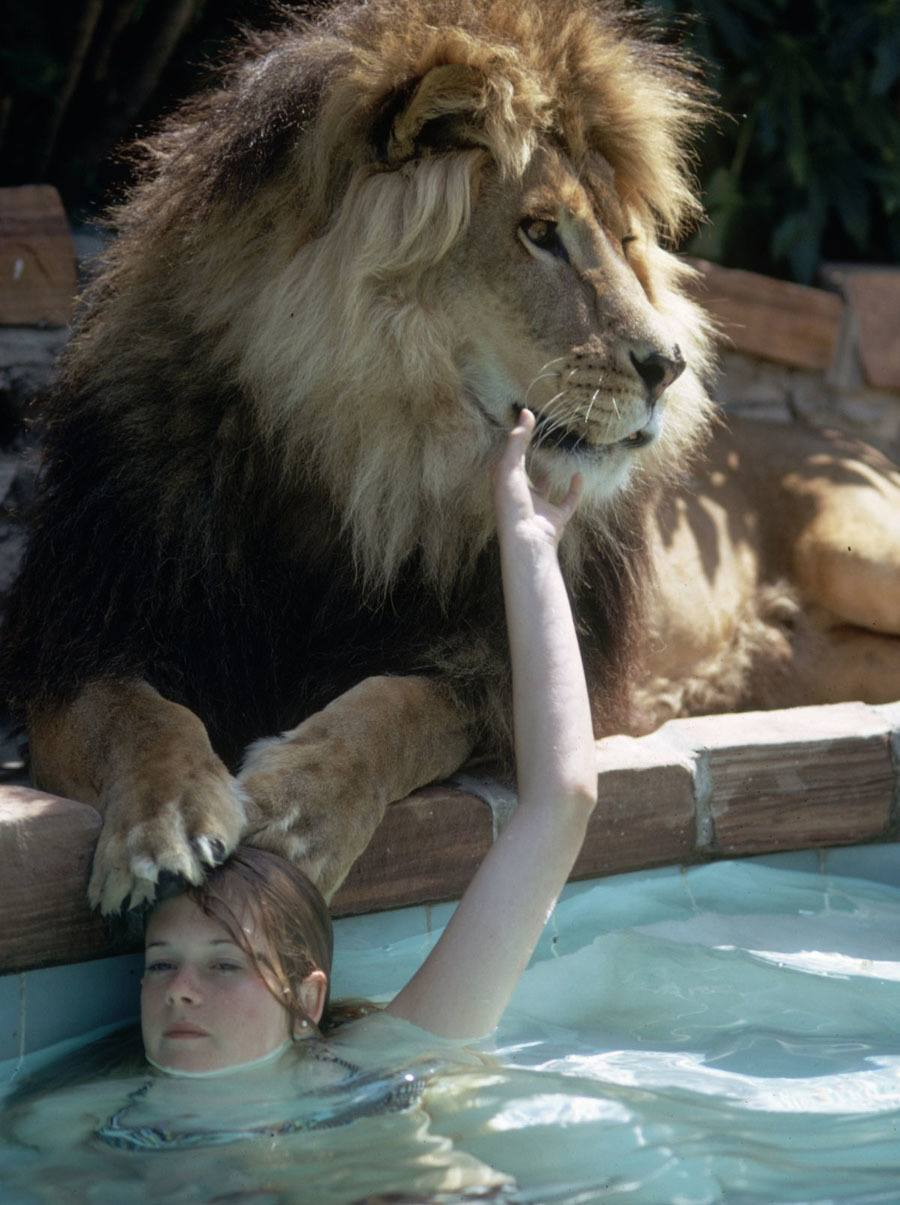 Melanie Griffith With Pet Lion
