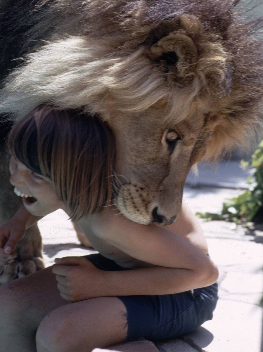 Life With A Lion Kid