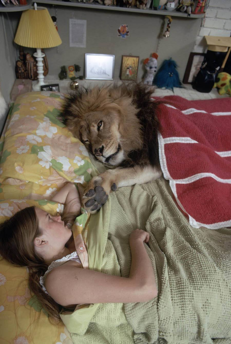 Life With A Lion Pillow