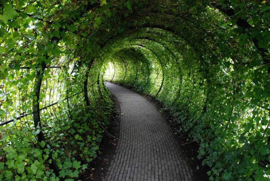 Poison Garden Ivy Tunnel