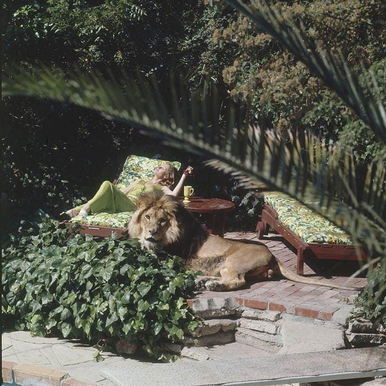 Tippi Hedren Sunbathes With Pet Lion