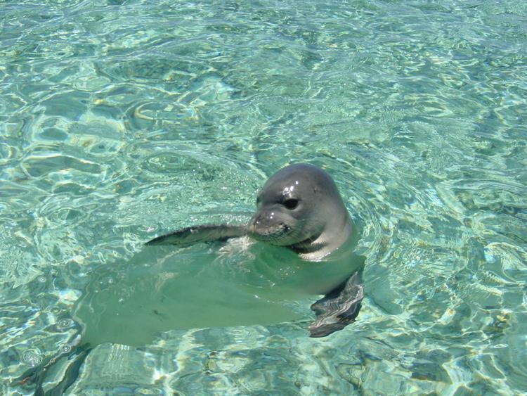 Endangered Animals Monk Seal