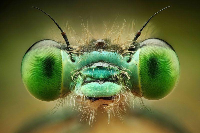 Bug Eyes Up Close