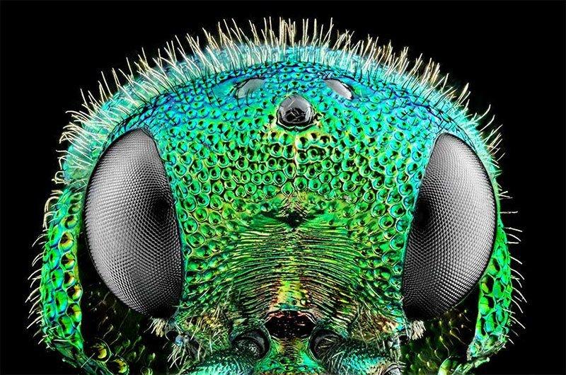 Bug Macro Photography
