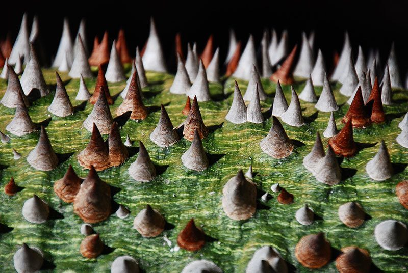 Cactus Spikes Magnified