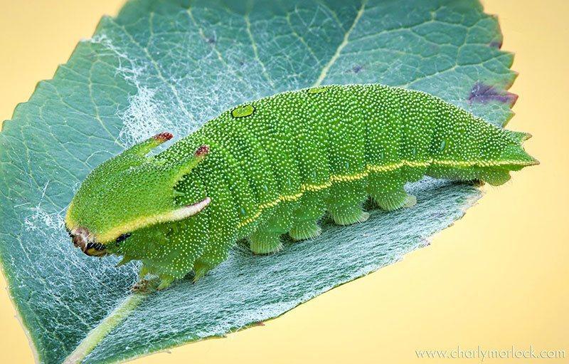 Caterpillar Up Close