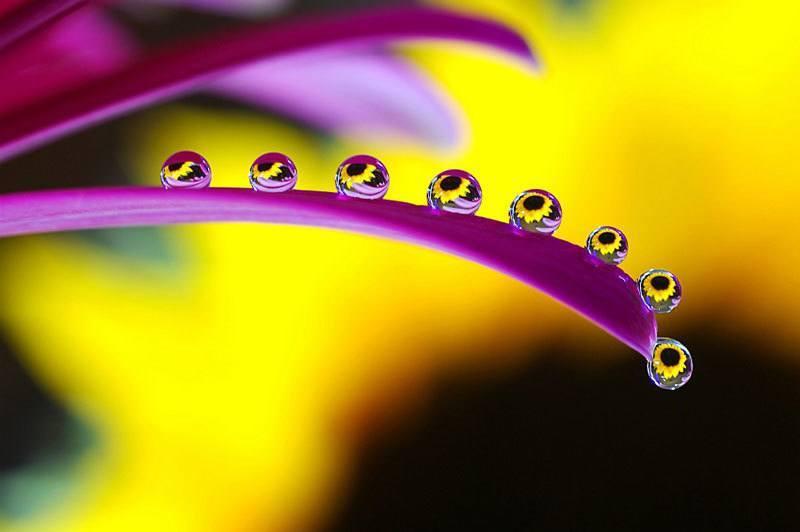 Beautiful Water Droplets Up Close