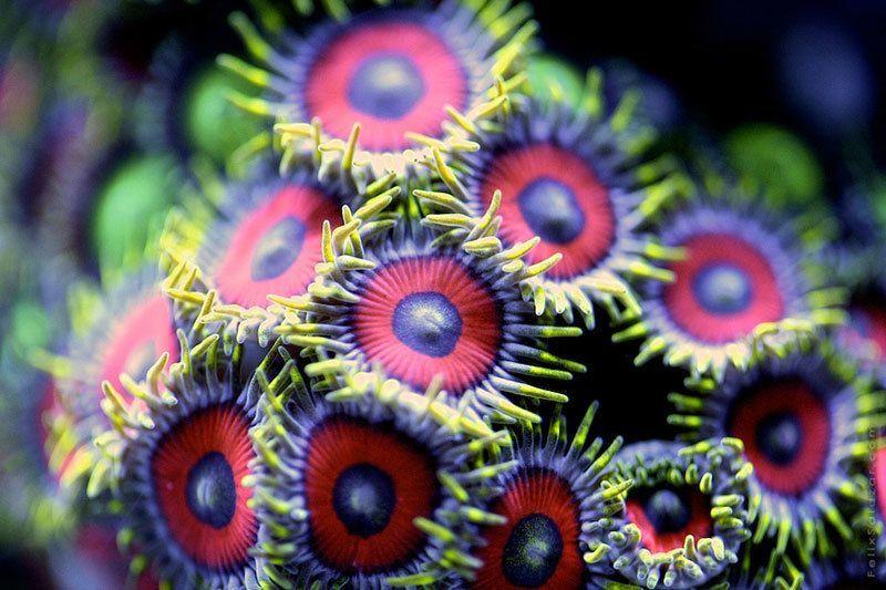 Coral Up Close Photos