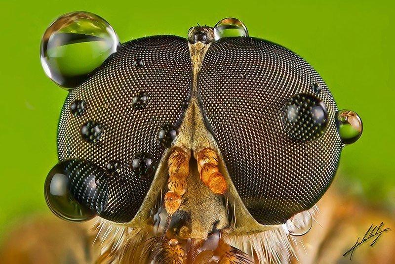 Insect Eyeballs Up Close