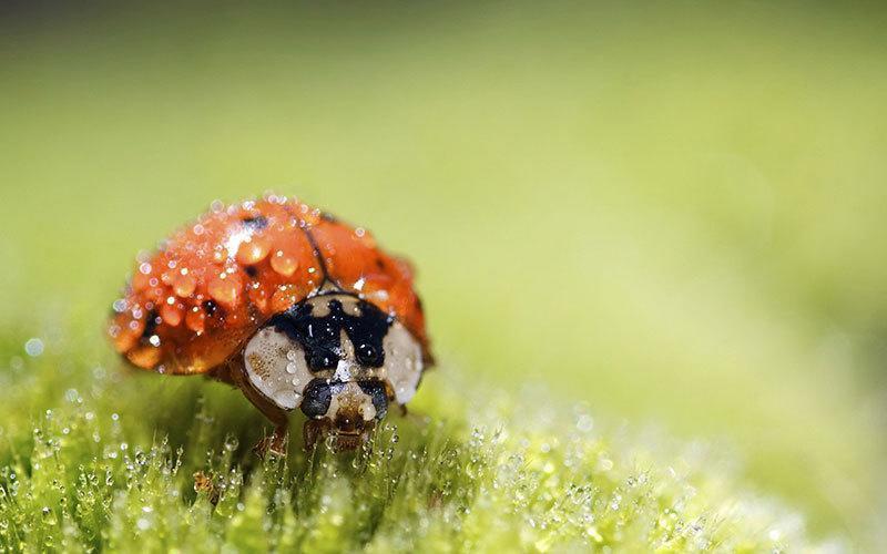 Ladybug Macro Photography
