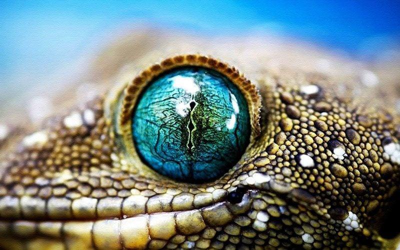 Incredible Lizard Eye