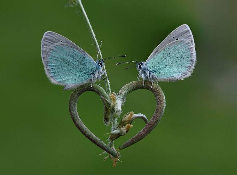 Moths Up Close