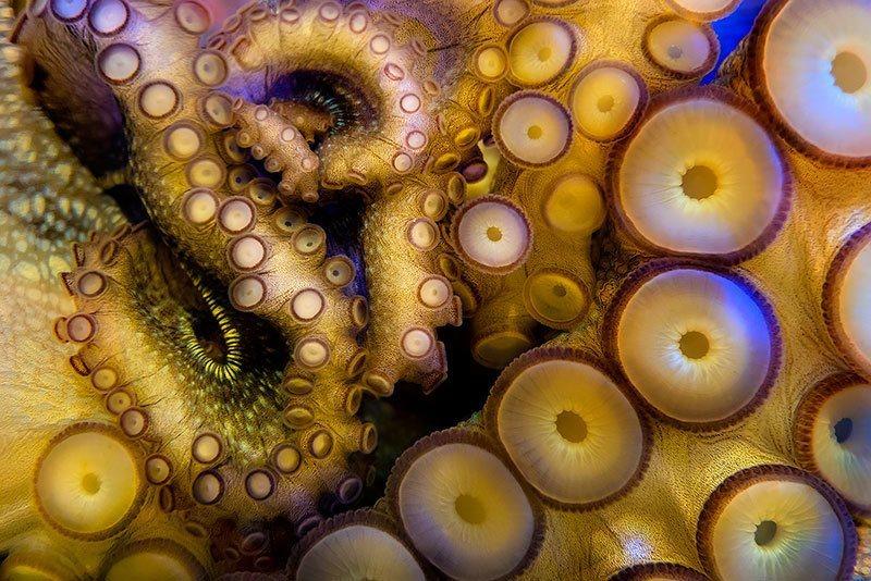 Sea Life Macro Photography