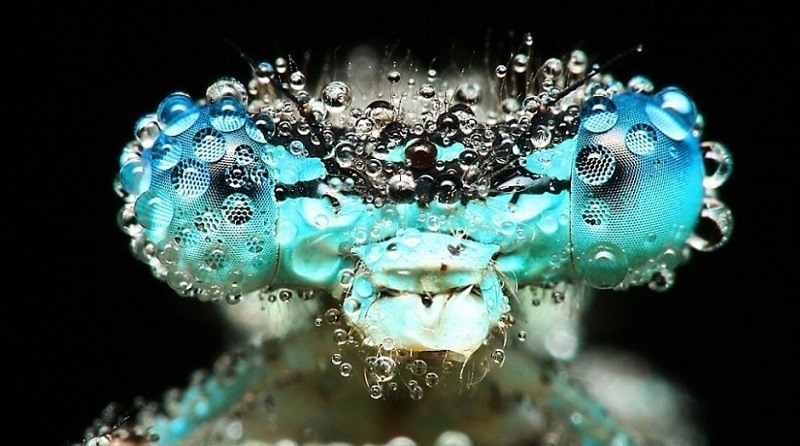 Incredible Examples of Macro Photography