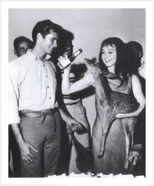 Vintage Hollywood Audrey Hepburn Deer