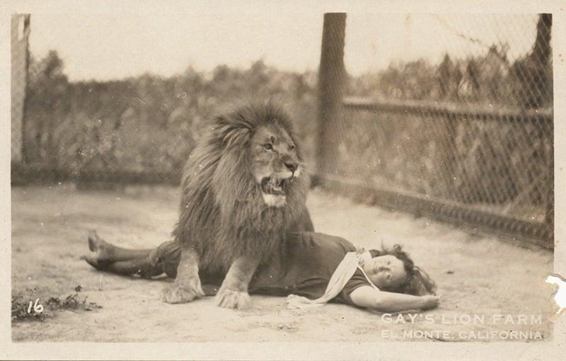 Gay's Lion Farm