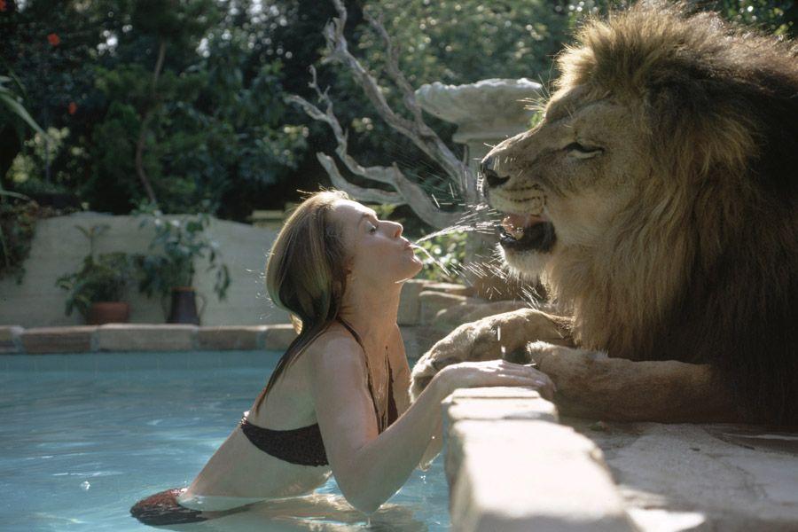 Pet Lions