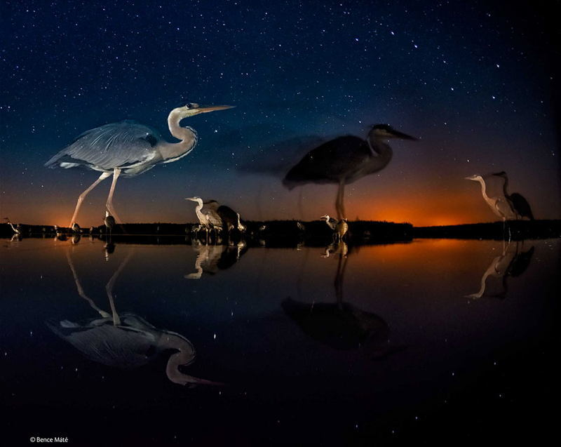 Wildlife Photos Birds