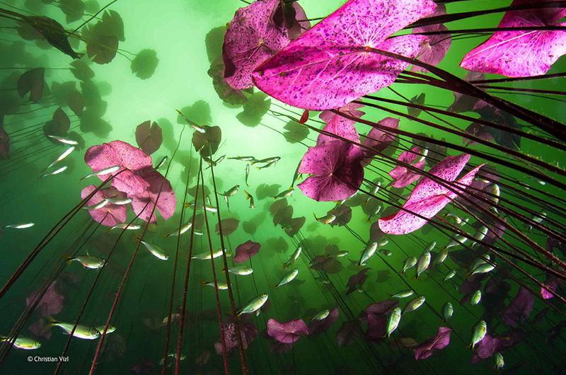 Wildlife Photos Fungi