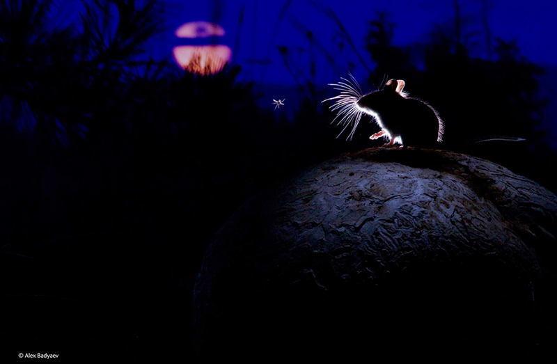 Wildlife Photos Mouse