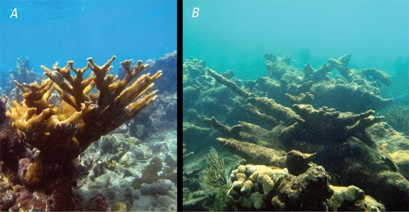 Healthy Coral and Acid-Damaged Coral