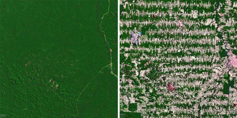 Amazon Rainforest In 1975 And 2008
