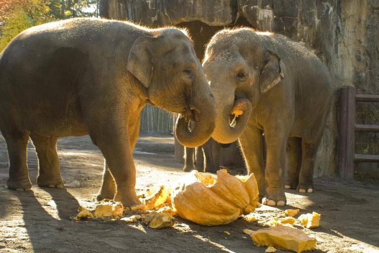 Elephant Love Peanuts