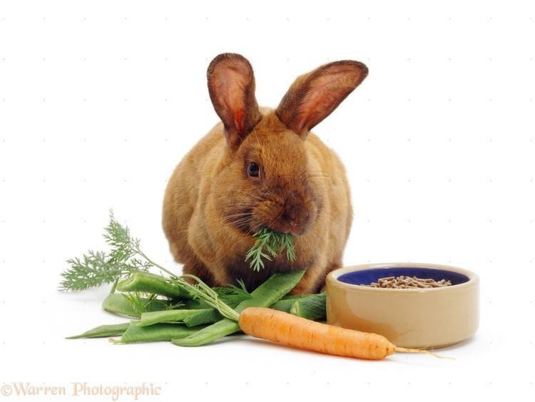 Animal Myths Rabbits And Carrots