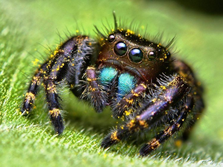 Animal Myths Spider