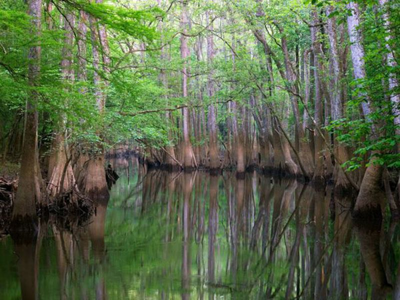 Congaree Cyprus