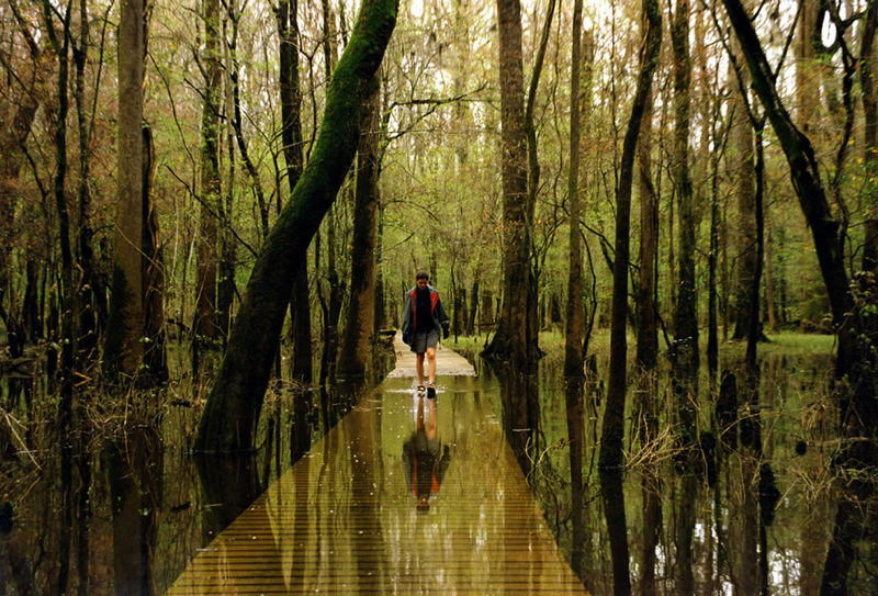 Coolest National Parks Congaree