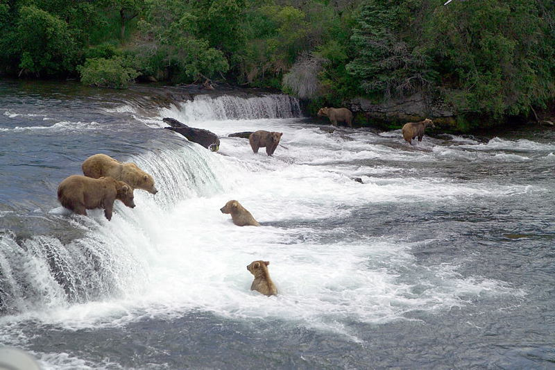 Coolest National Parks Katmai