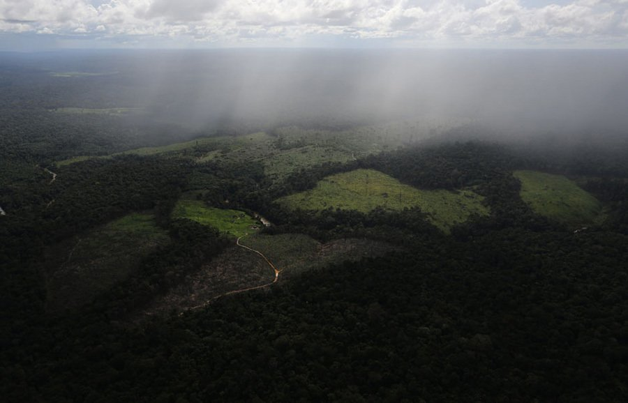 Disappearing Amazon Clearing