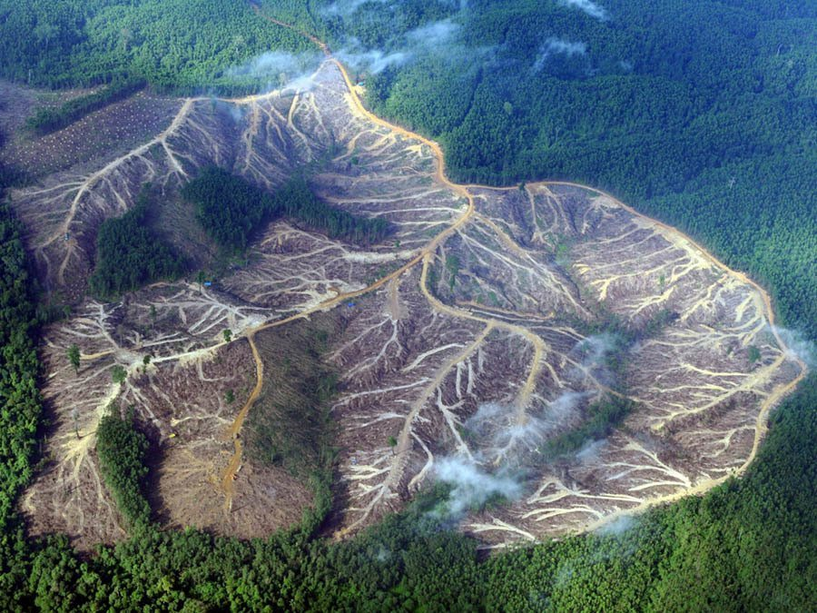 Disappearing Amazon Deforestation