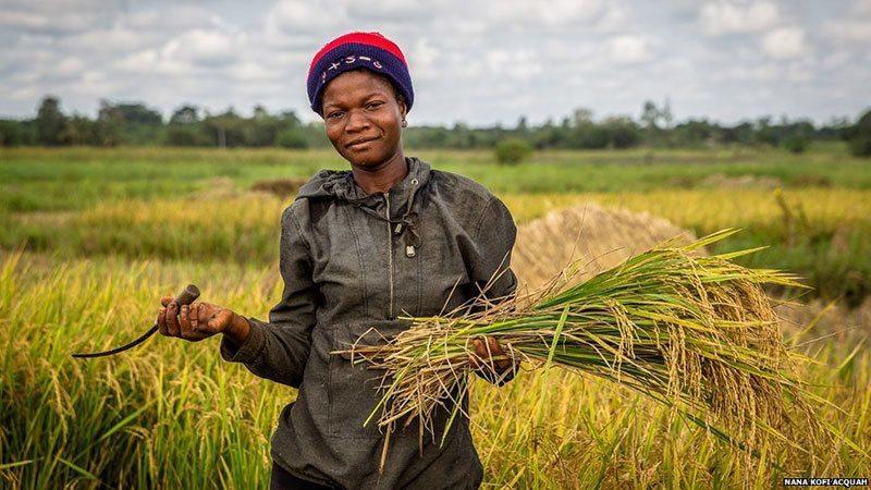 African Woman Farming