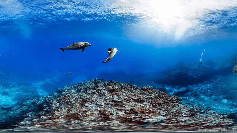 Barrier Reef Dolphins