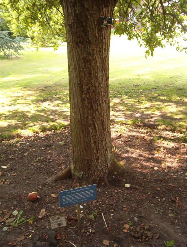 Newton Tree Cambridge