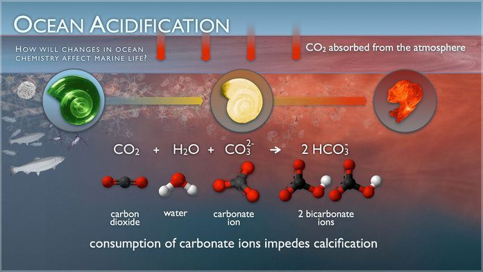 Climate Change Affects Calcification Of Sea Life