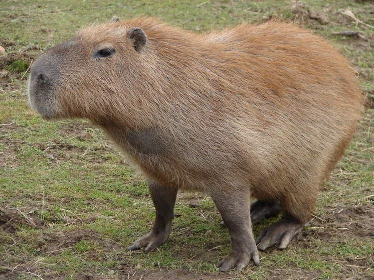 From Otters To Capybaras, 6 Weird Pets That You Could ...