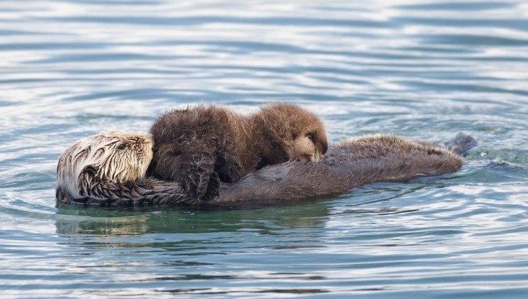 Weird Pets Otter Floating