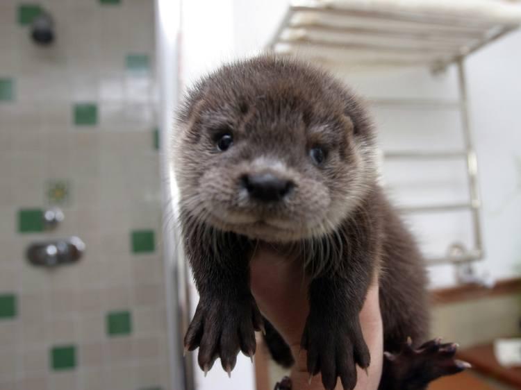 Weird Pets Otters