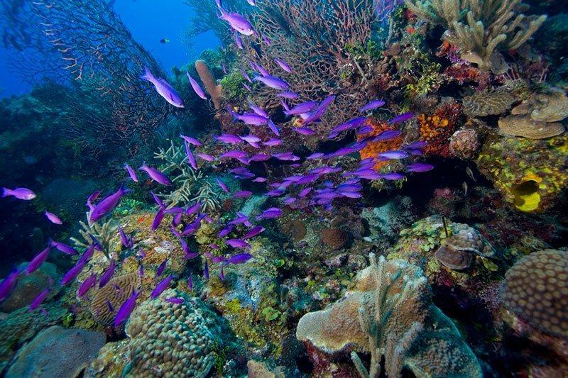 Fish in Belize Barrier Reef