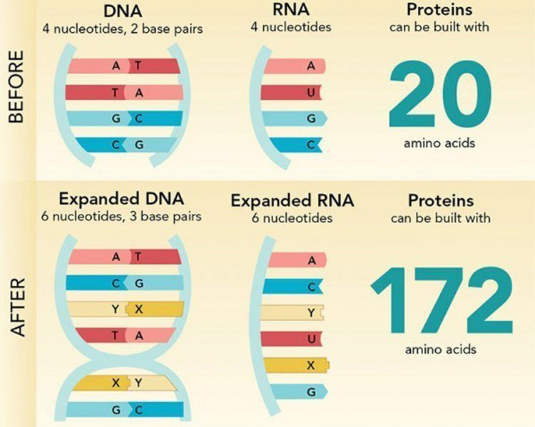2014 Discoveries Expanded DNA Alphabet